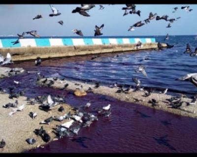 Море у берегов Феодосии стало фиолетовым
