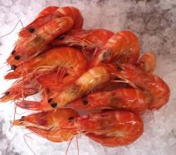 Лимит по вылову креветки в Черном море закончился