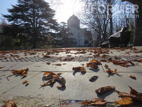 опавшие листья в Севастополе