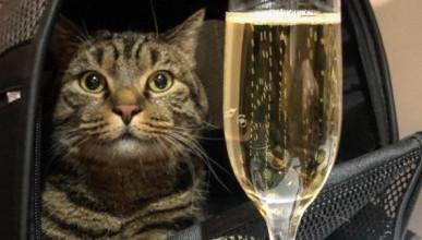 История с «толстым котом» сильно повредила имиджу «Аэрофлота»