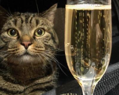 История с толстым котом сильно повредила имиджу «Аэрофлота»