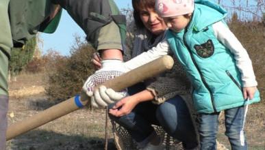 Пусть растут деревья в Севастополе, а не свалки!