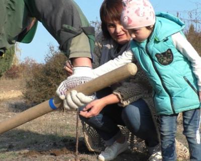 Пусть растут деревья в Севастополе, а не свалки! (ВИДЕО)
