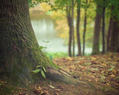 На Матросском бульваре пустили под нож более 600 многолетних деревьев (ФОТО)