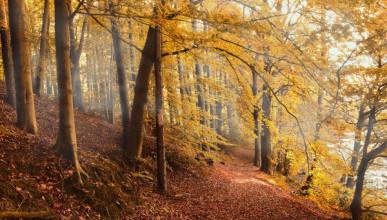 Севастопольские леса вернули городу