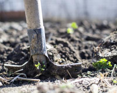 Севастопольцы нашли снаряды и бомбу в своём огороде