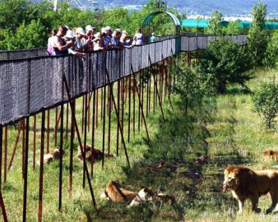В крымском парке львов установлены нарушения кассовой дисциплины