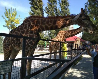 Глава Крыма Сергей Аксенов обвинил владельца зоопарка «Тайган» в клевете