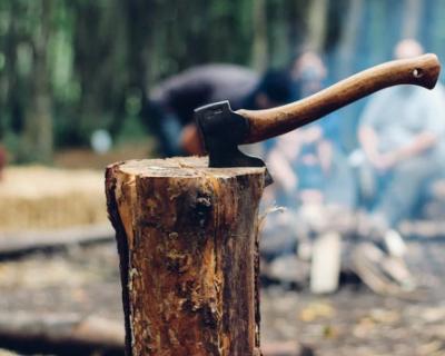 Севастопольцы смогут заготавливать дрова по закону