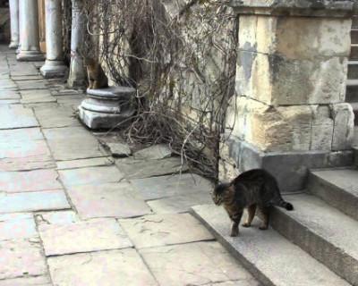 В Херсонесе рассказали о котах, которые охраняют музей