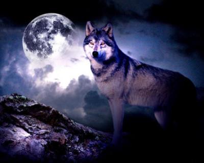 Вечером 10 января землян ждет волчье полнолуние