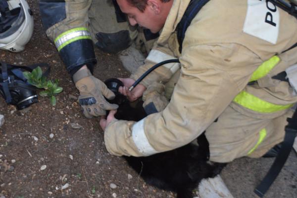 Огнеборцы Севастополя ликвидировали пожар в квартире пятиэтажного дома и спасли котов