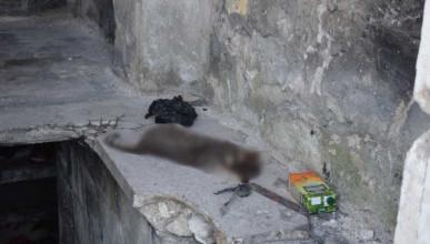 Бомжи в Севастополе едят домашних животных?