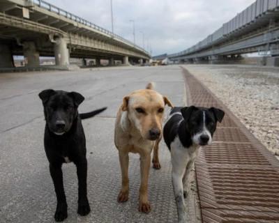 Люди, заберите собак с Крымского моста!