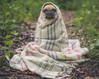 В Севастополе планируется стерилизовать 67 собак
