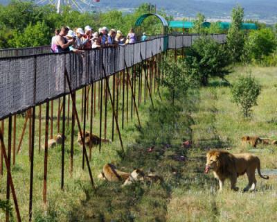 Ситуация с крымским парком львов «Тайган» урегулирована