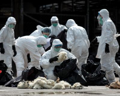 Первые симптомы нового коронавируса из Китая