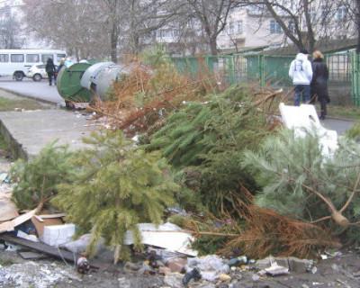 В Севастополе начался процесс переработки новогодних елок