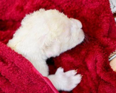 В парке «Тайган» родились белые львята (ВИДЕО)