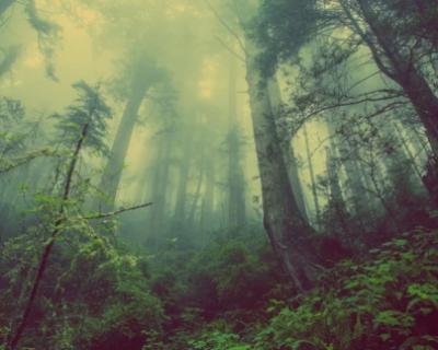 В Севастополе готовятся к акции «Лес Победы»