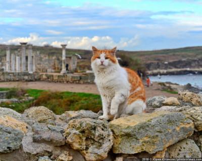 В Херсонесе открывается выставка, посвященная котам