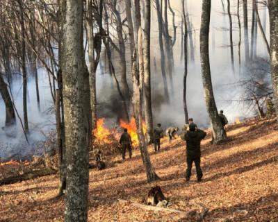 С начала года в Крыму произошло три лесных пожара