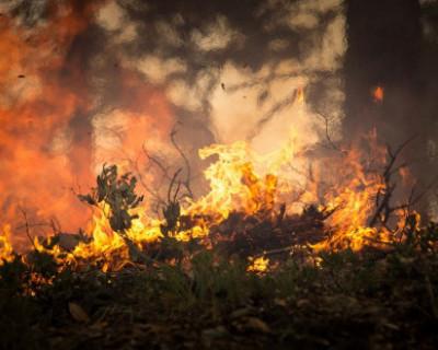 Крымские спасатели потушили лесной пожар на окраине Симферополя