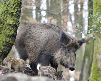 Особенности севастопольской охоты