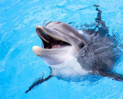В Крыму откроют «скорую помощь» для дельфинов