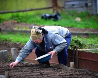 Вирусолог объяснил, чем чреваты садоводческие выходные в Крыму на нерабочей неделе