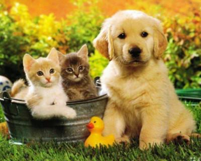 Домашние животные не болеют коронавирусом SARS-CoV-2