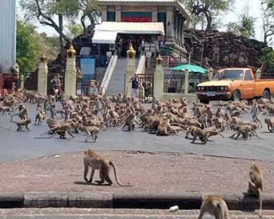 В Таиланде обезьяны устроили драку на улицах города (ВИДЕО)