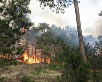 Под Ялтой ликвидировали лесной пожар