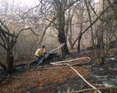 Пожарные МЧС потушили лесной пожар в Крыму