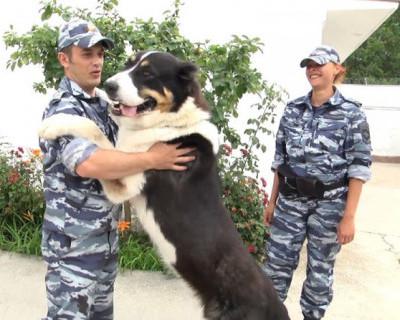 Судьба полицейских собак Севастополя