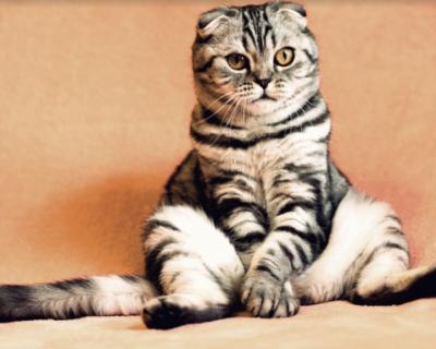Животные соблюдают карантин лучше, чем люди (ФОТО)