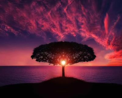 Природа говорит «спасибо» за то, что люди на самоизоляции
