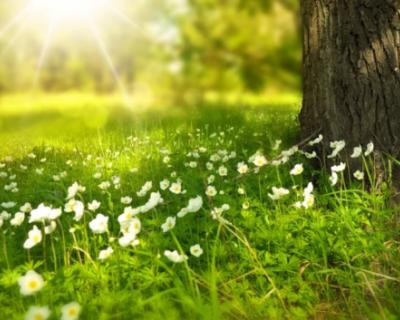 Крымчанам нельзя ходить в лес до 12 мая