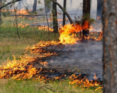 В Крыму за выходные ликвидированы три лесных пожара