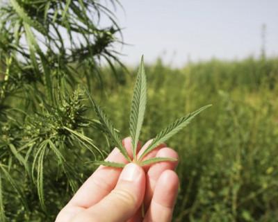 Зачем им такие испытания!? С 24 февраля на Аляске можно свободно употреблять марихуану