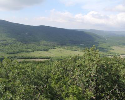 В Севастополе спасли заблудившуюся в лесу семью