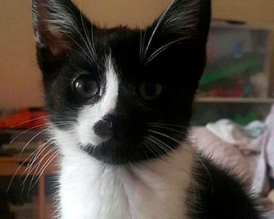 Пропавшего британского кота нашли в 420 километрах от дома
