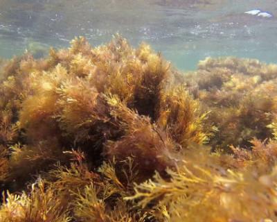 В Севастополе под угрозой исчезновения находятся 14 видов редких растений