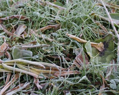 В Крыму прогнозируют заморозки