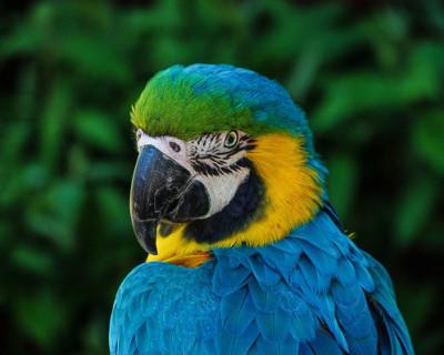 В Аргентине попугая допросят по делу об убийстве