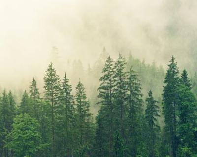 Крымчане не смогут попасть в лес до конца июня