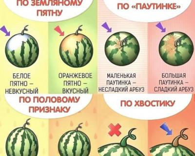 Как определить вкусный арбуз