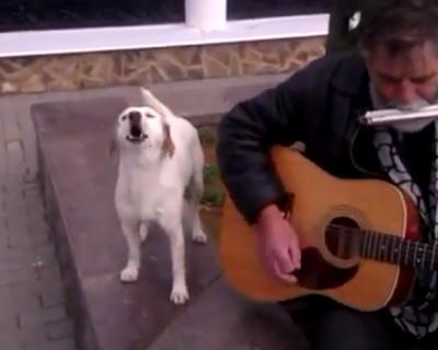 Собака, которая поет на набережной в Крыму (видео)