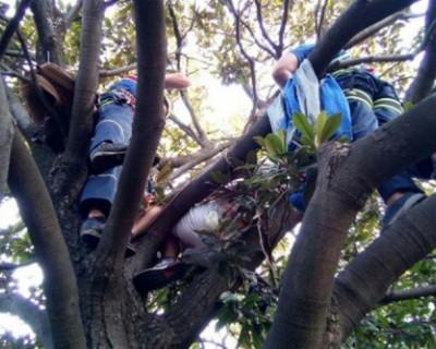 В Ялте мужчина застрял на дереве