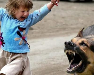 В Новоозерном под Евпаторией на детей бросаются бездомные собаки. Руководство поселка молчит!